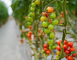 175 miljoen euro beschikbaar voor duurzamere landbouw